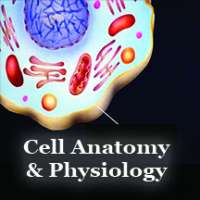 Cell Anatomy and Physiology